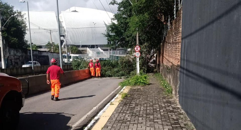 Árvore caída na Romualdo Galvão